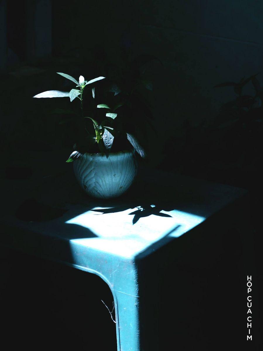 NIGHT TALK | POEM 01 | CÁI CÂY |